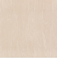 Picture of Wood Grain Ivory Polished Porcelain Floor/Wall Tile | 600 x 600mm | Order Online | South Africa