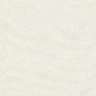 Picture of Cream Polished Porcelain Floor/Wall Tile | 600 x 600mm | Order Online | South Africa